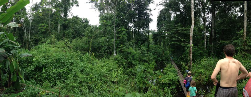 Amazonie - Naud 2