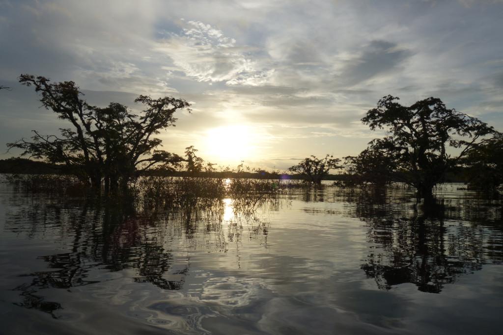 Amazonie - Naud 24