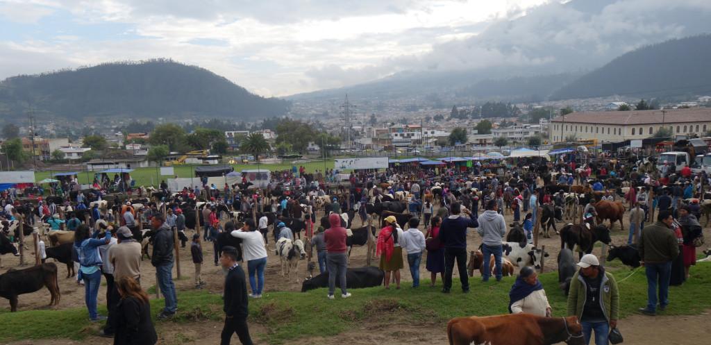 Otavalo 25 - Naud