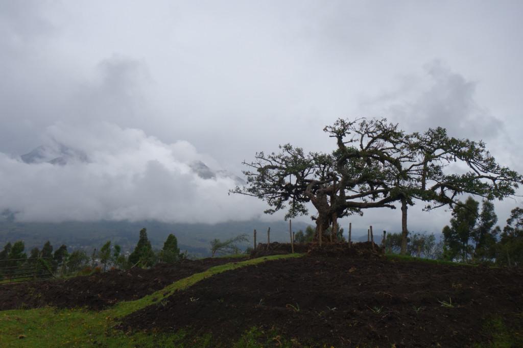 Otavalo 26 - Naud