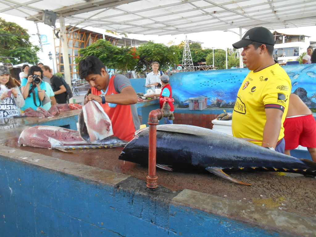 20170502 0463 Santa Cruz - Marché aux poissons