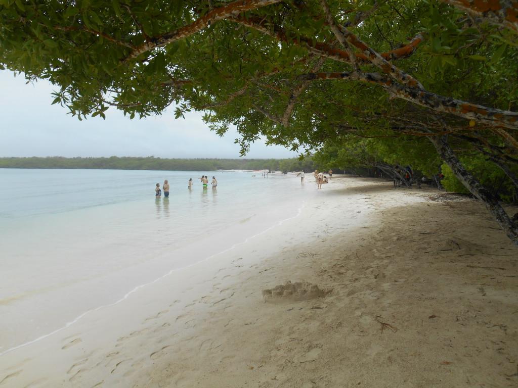 20170503 0499 Santa Cruz - Tortuga Bay