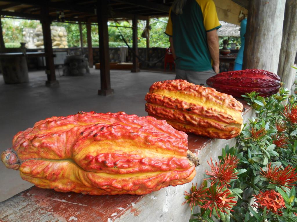 20170506 0811 Puerto Misahualli - Visite de la finca de cacao