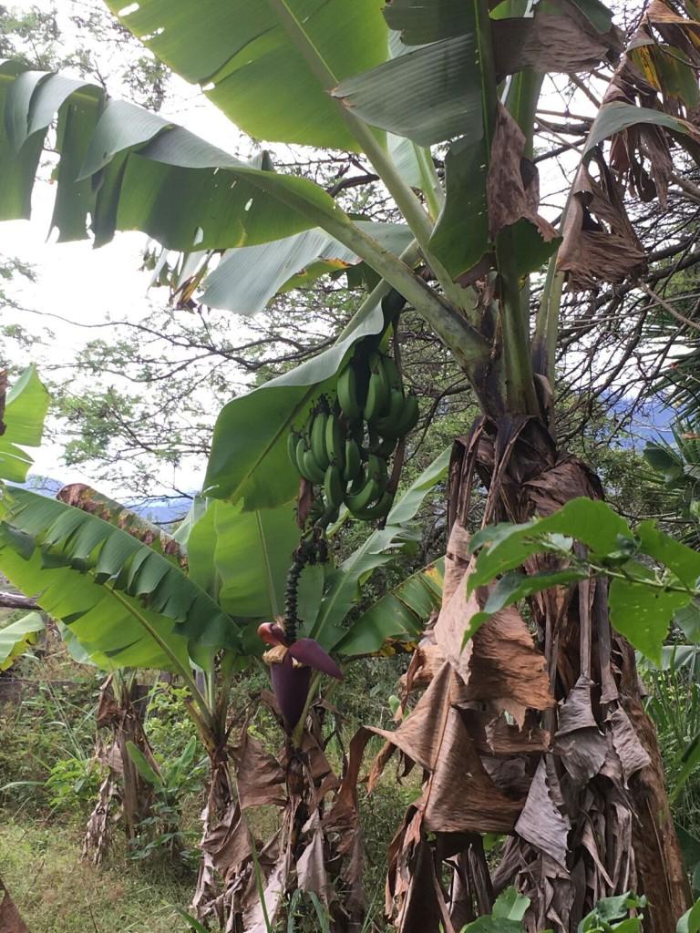 Bouvier Vilcabamba 2