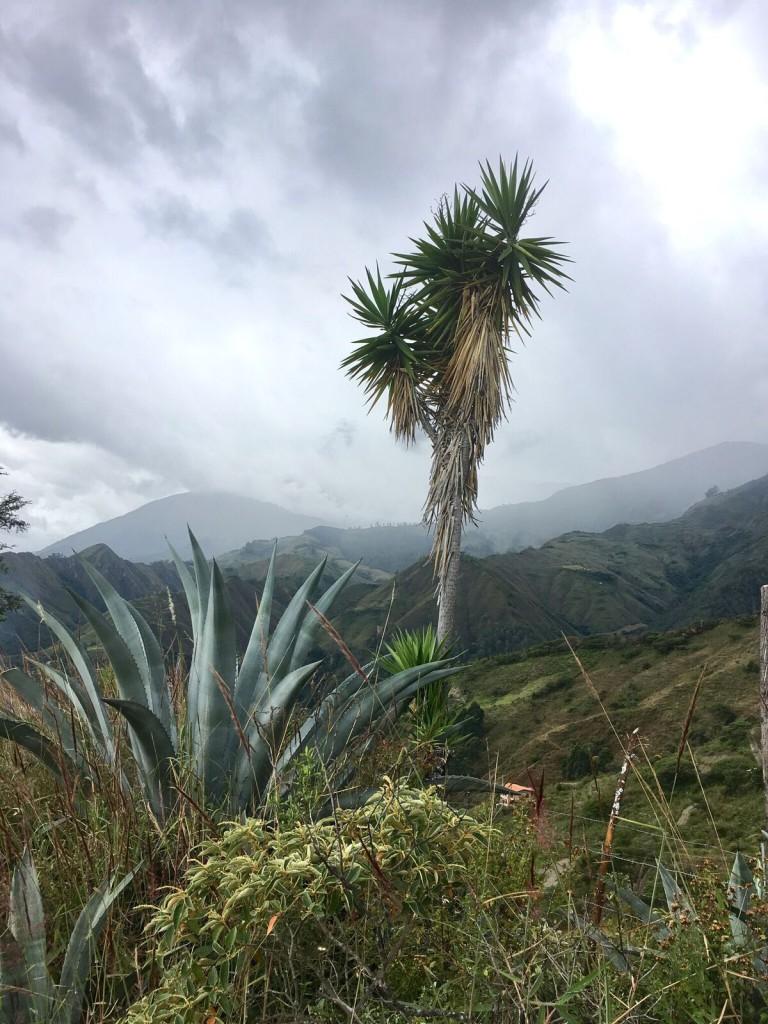 Bouvier Vilcabamba 5