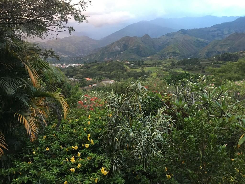 Bouvier Vilcabamba 7