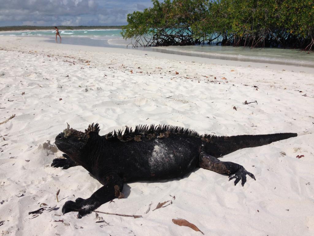 Galapagos Naud 22