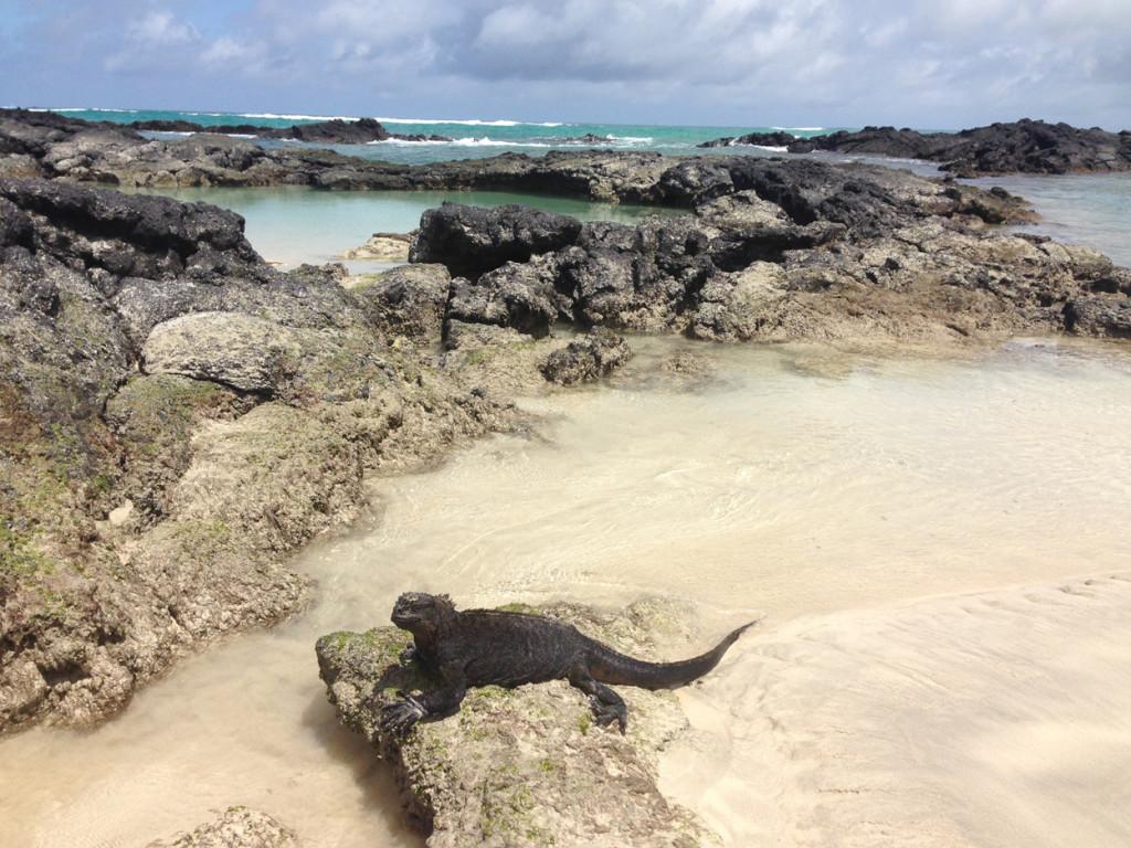 Galapagos Naud 36