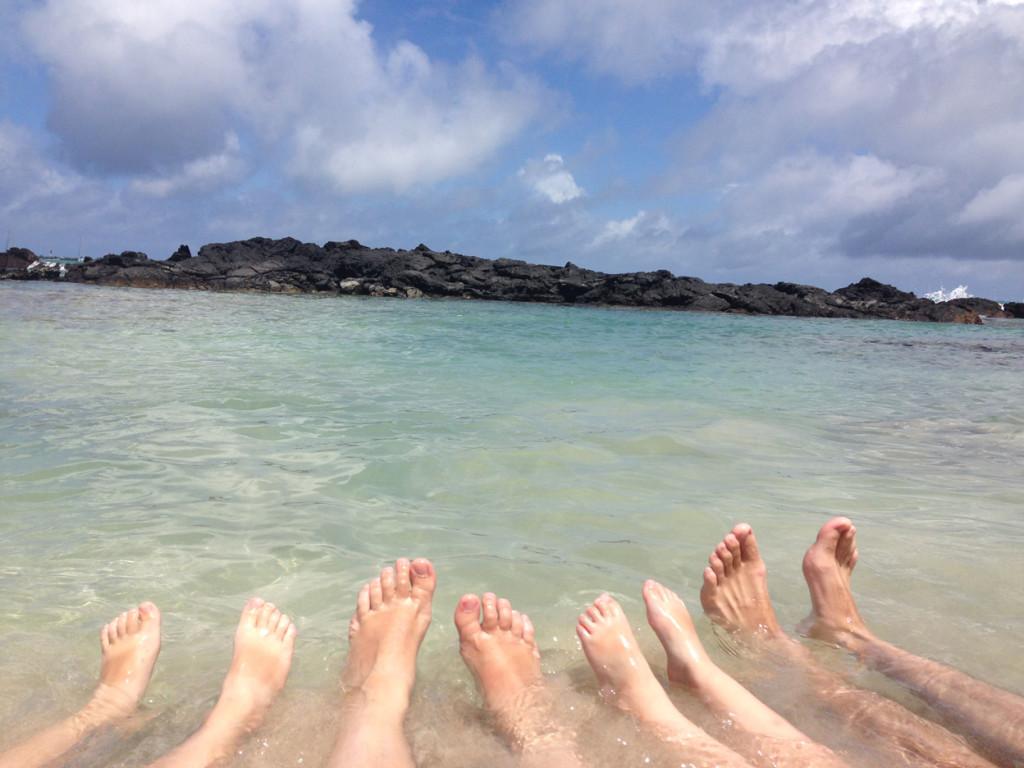 Galapagos Naud 38