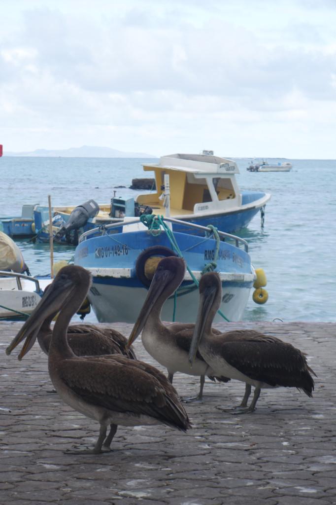 Galapagos Naud 39