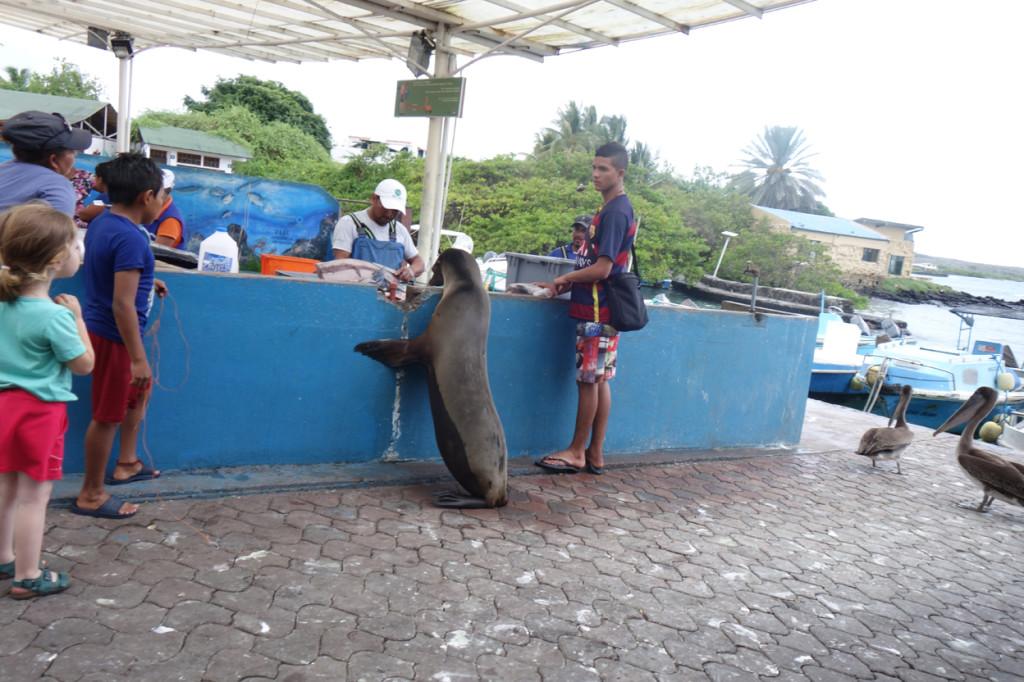 Galapagos Naud 40