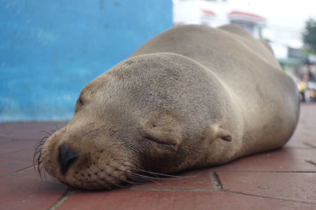Galapagos Naud 41