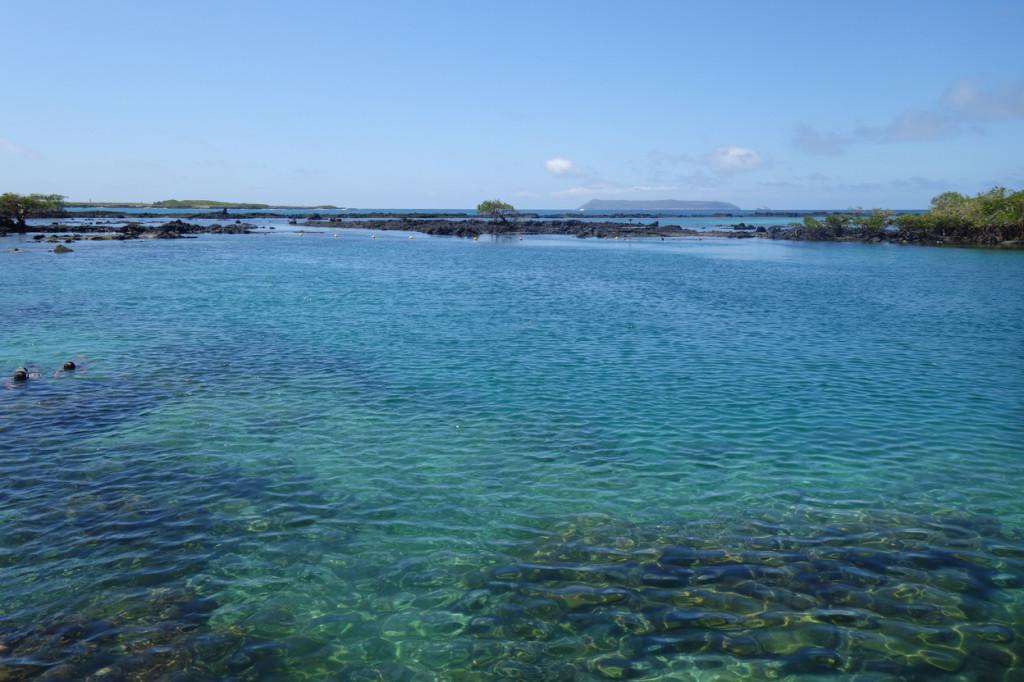 Galapagos Naud 5