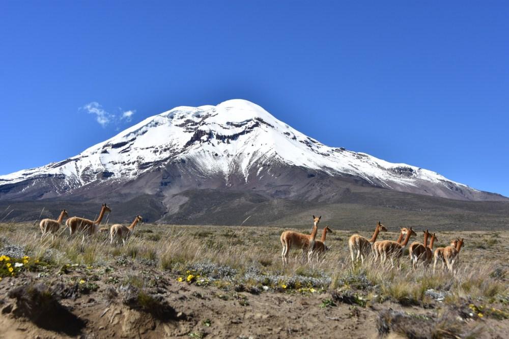Riobamba Tardivel 11