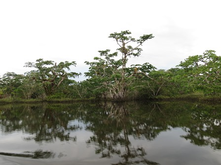 Amazonie 1 - Laurence et Patrice