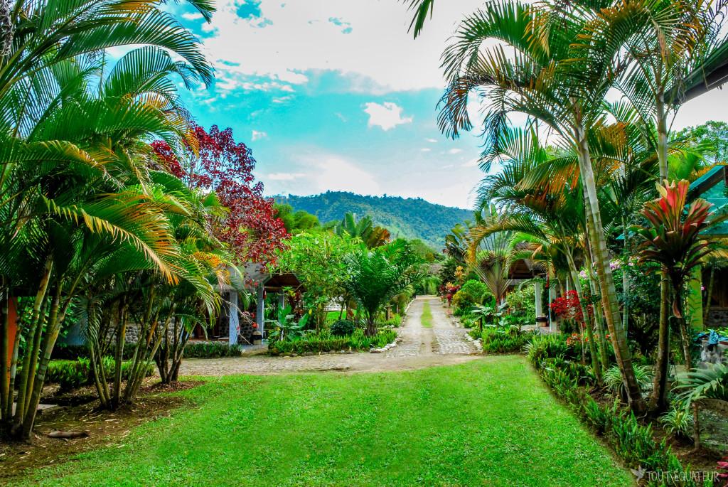 mindo-palmiers-tout-equateur