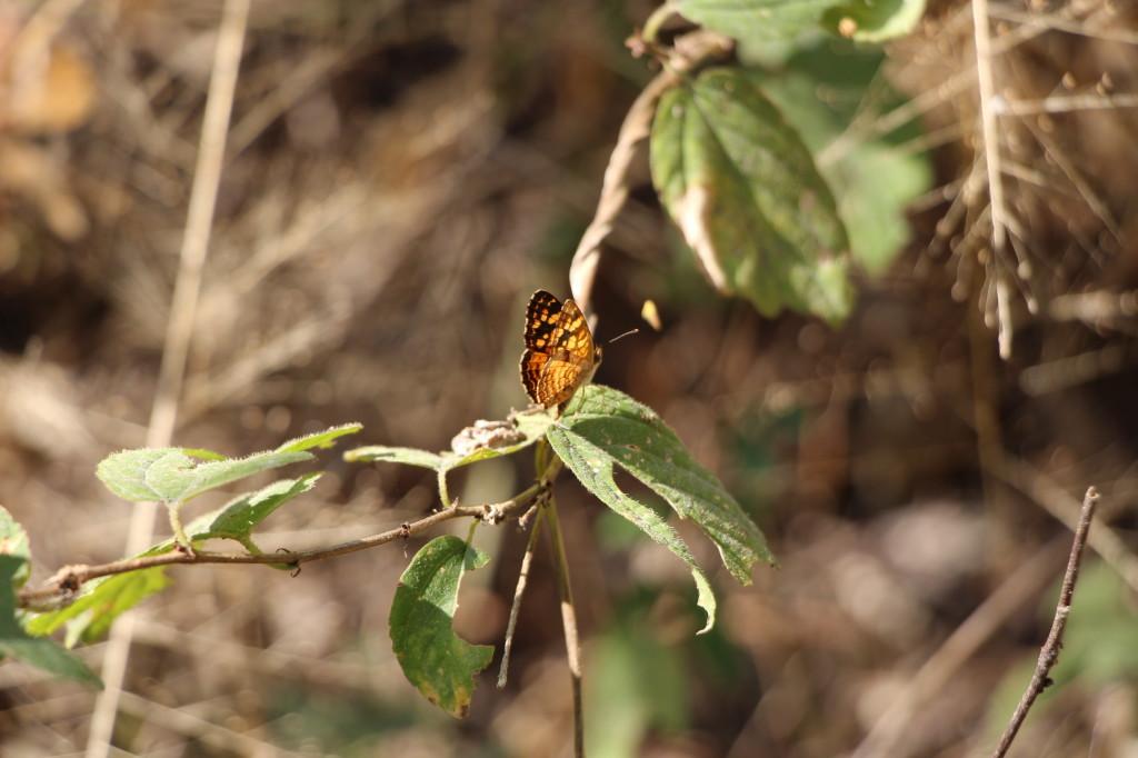 butterfly-ecuador_27915516128_o