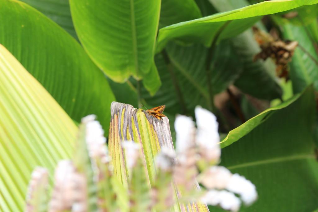 butterfly-in-mindo-ecuador_41742465842_o