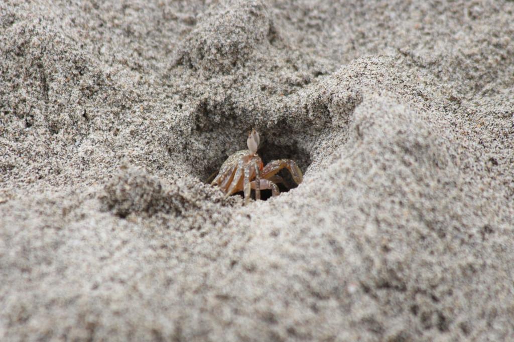 crab-ecuador_41742484212_o