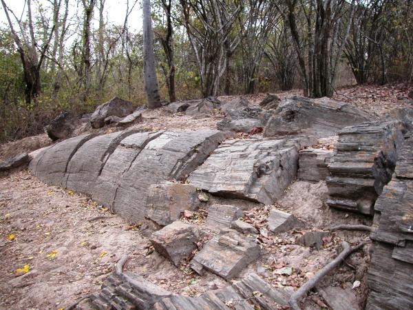 Bosque-Petrificado-de-Puyango