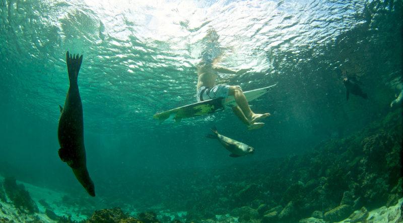 surf galapagos
