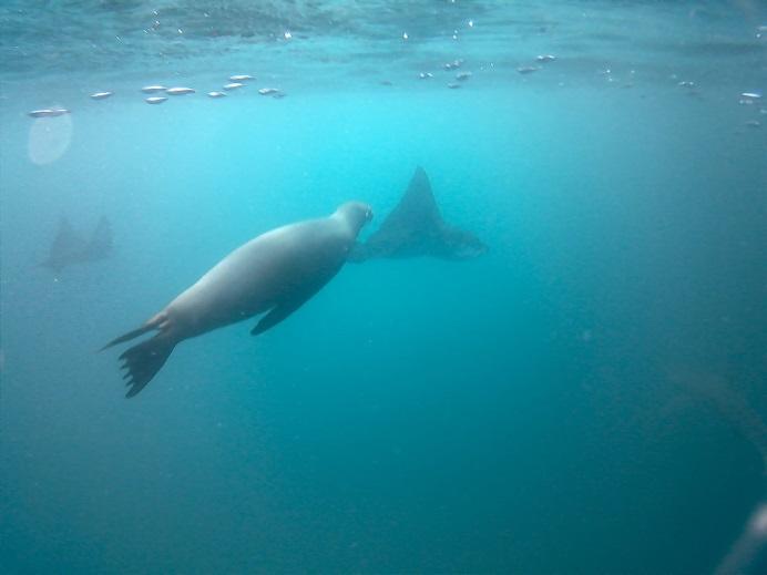 Randonnée sous-marine impressionnante!