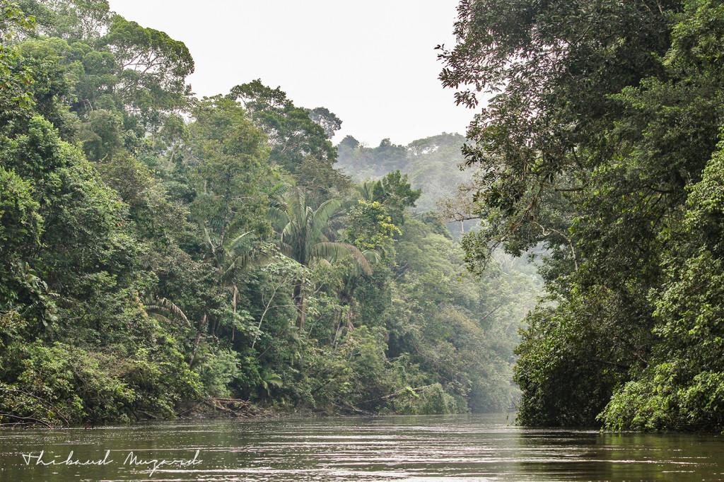 Rio Cuyabeno