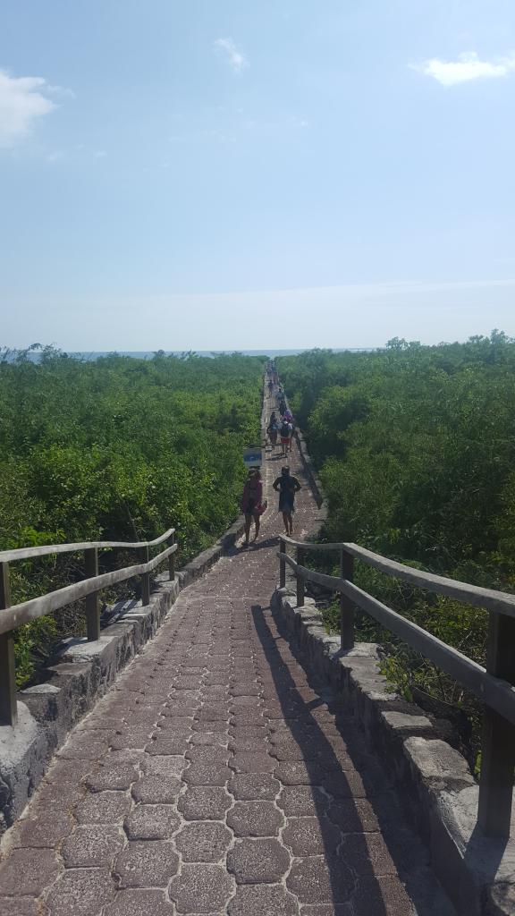 chemin tortuga bay