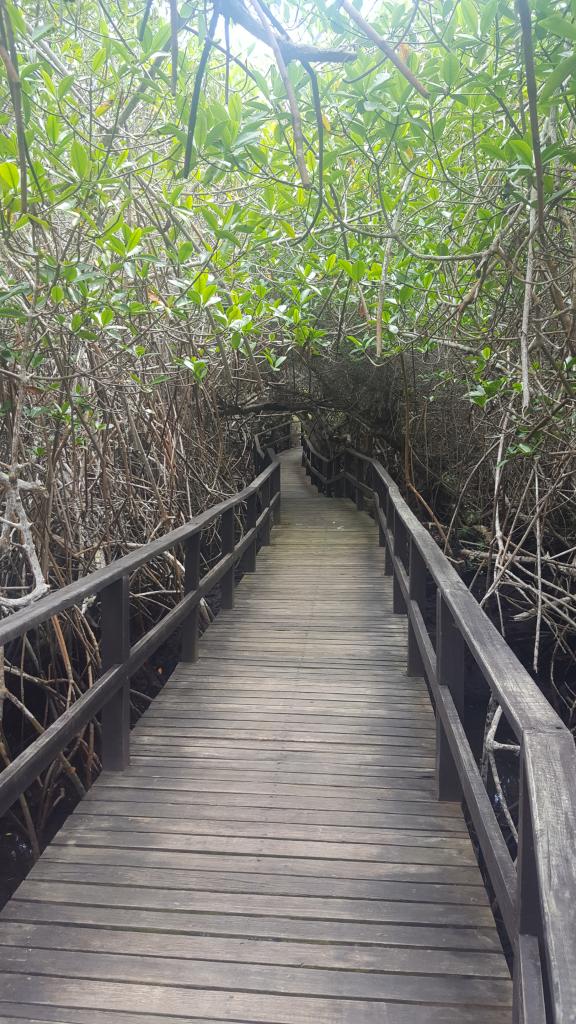 mangrove isa