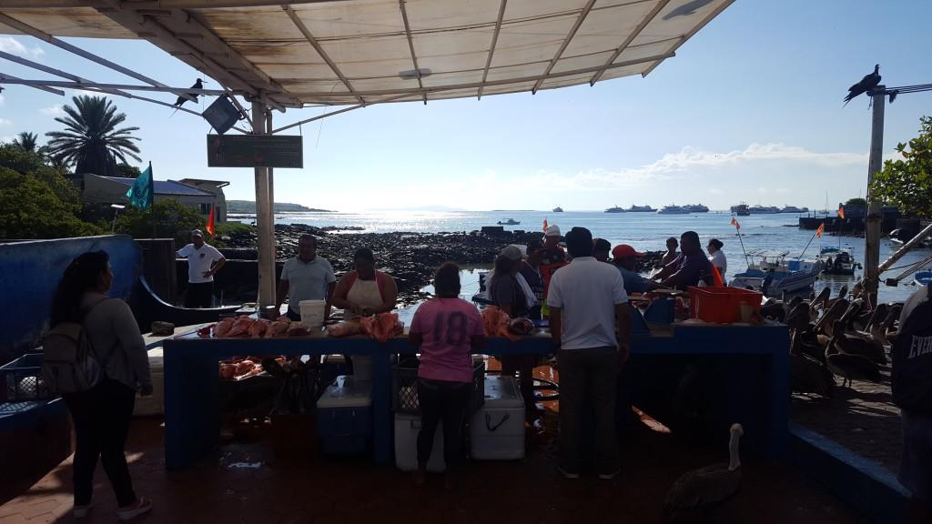 marché poisson isabela