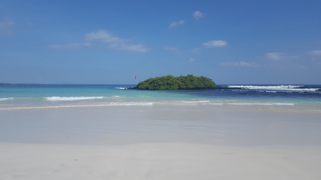 plage tortuga bay 2
