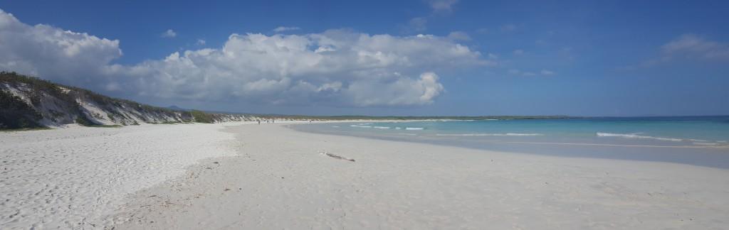 playa tortuga bay