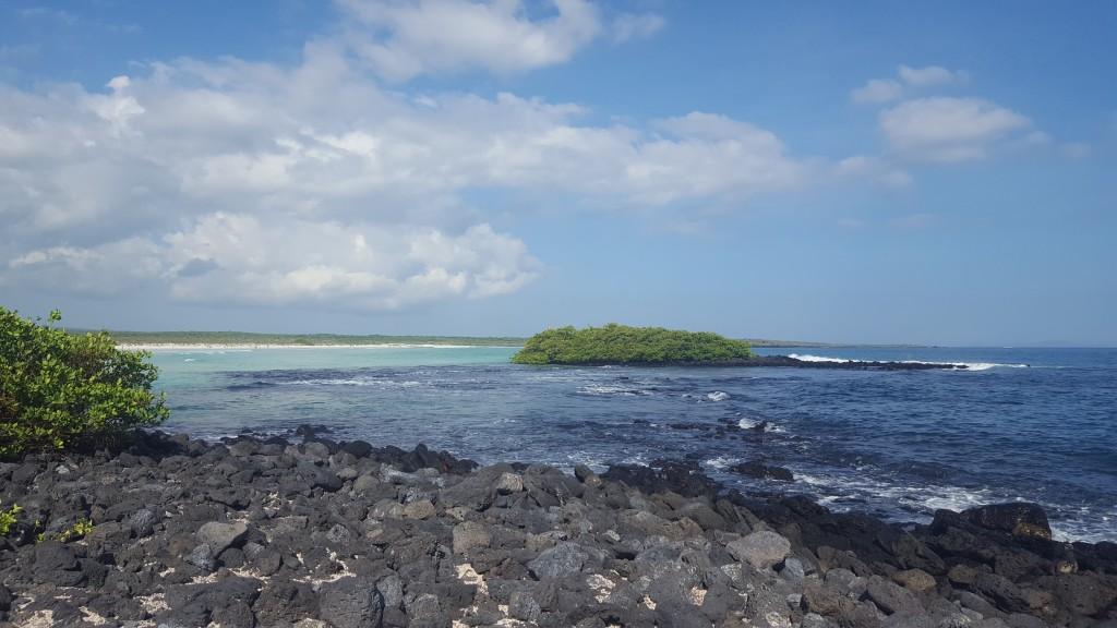 tortuga bay plage