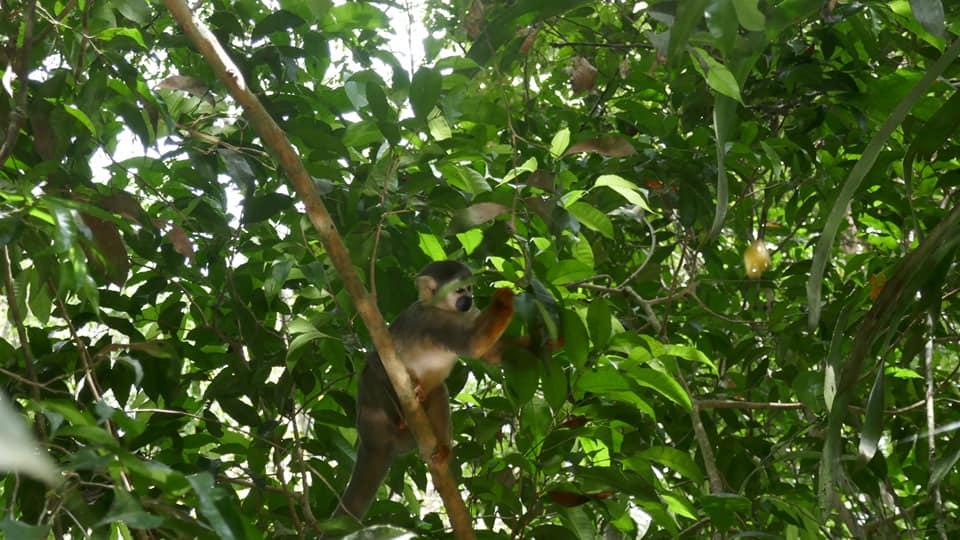 singe ecureuil