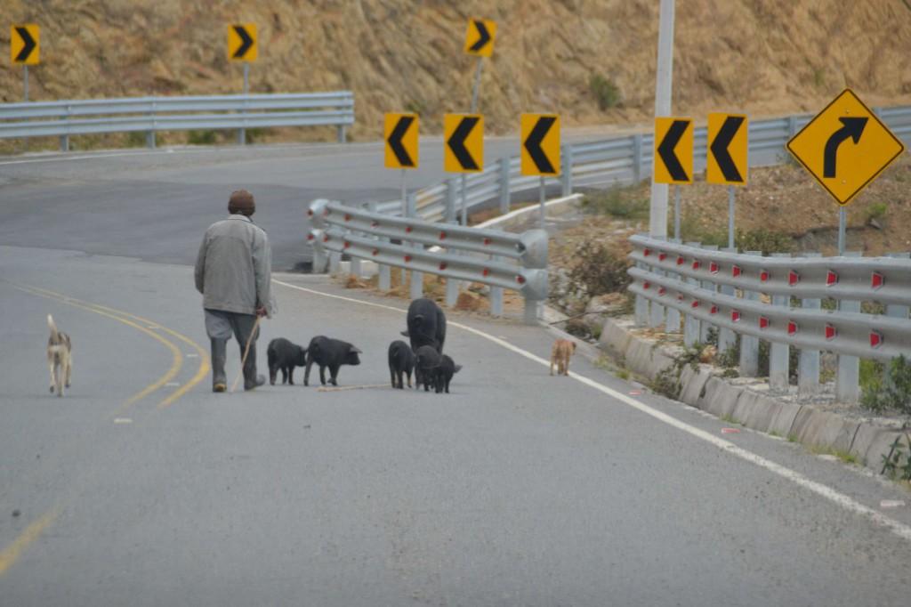 23 troupeau route Quilotoa