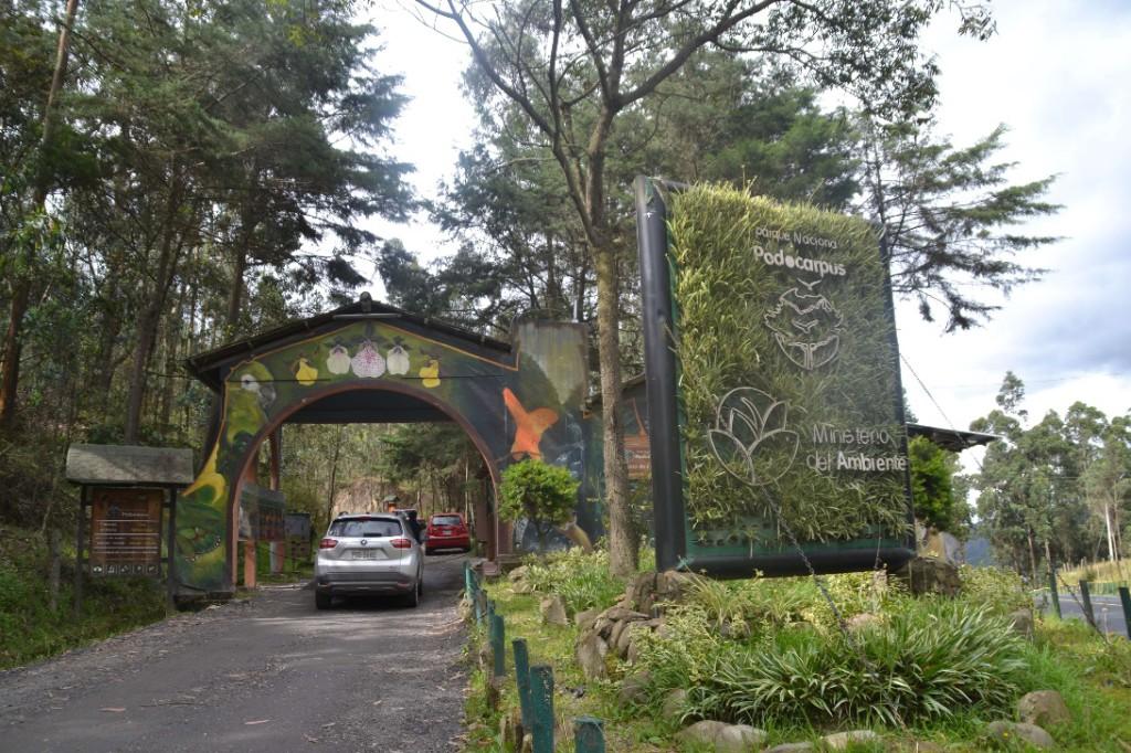 34 entrée Podocarpus
