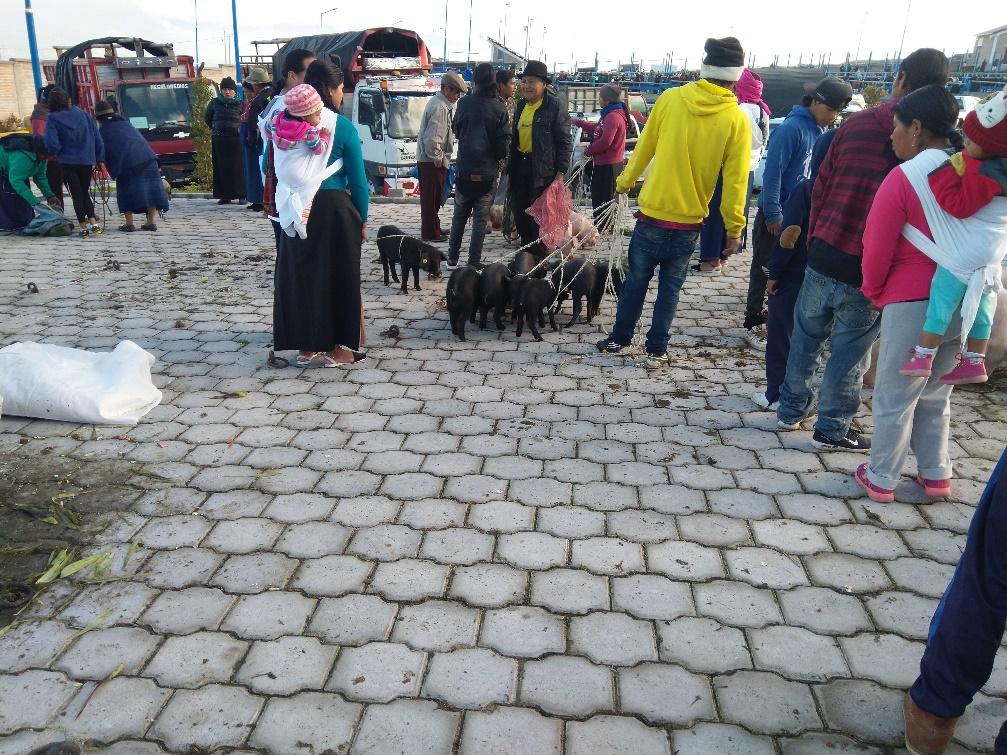 44 Otavalo